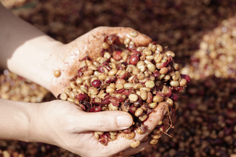 Câu chuyện khởi nghiệp cà phê rang xay Amino Coffee Roastery Việt Nam
