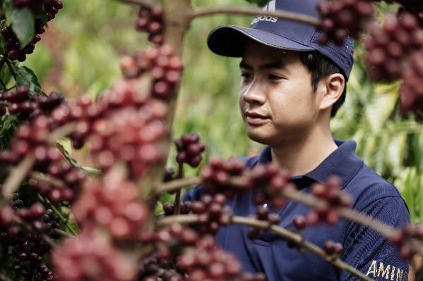 Quy Trình sản xuất cà phê Amino từ nông trại đến thành phẩm