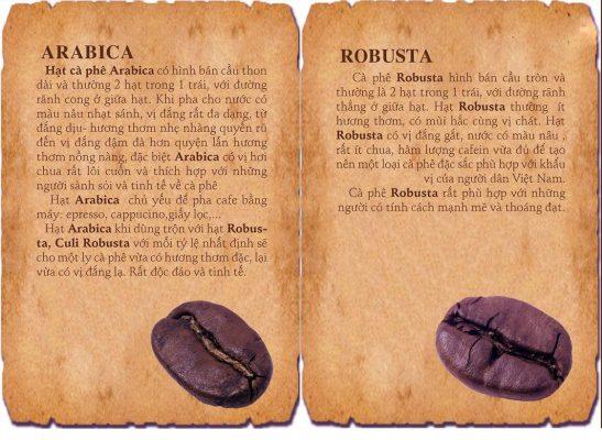 2 loại cà phê chính là Arabica ( cà phê chè) và Robusta ( cà phê vối).