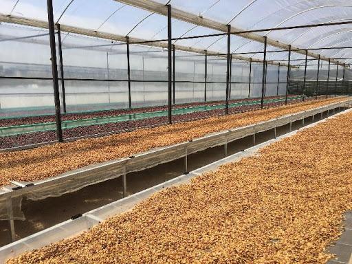Quy trình sản xuất cà phê Amino Coffee tại xưởng