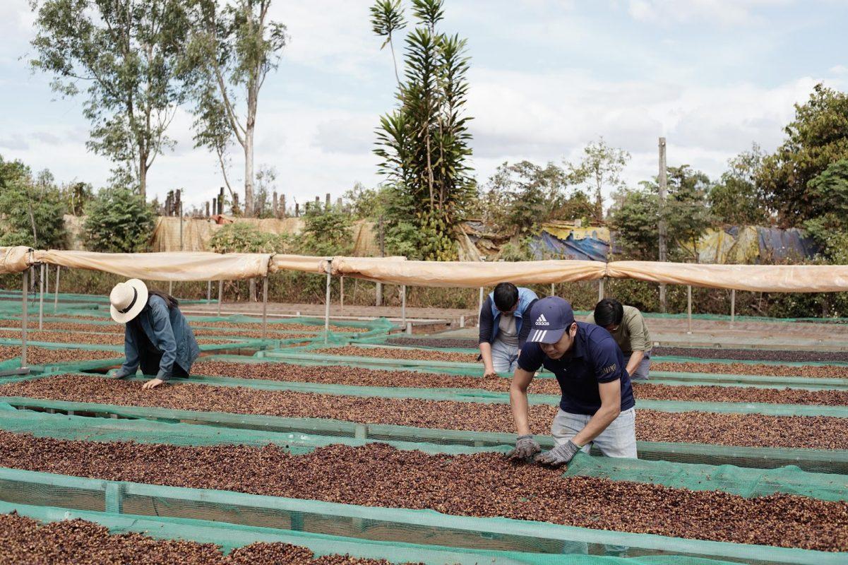 Sản xuất cà phê từ nông trại Amino Coffee